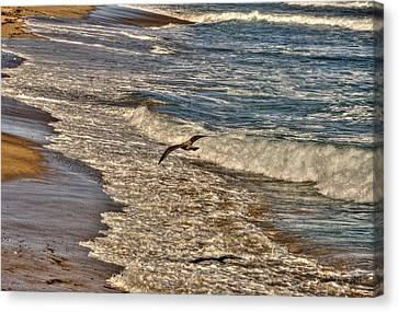 Canvas Print featuring the pyrography Bird Gliding Over Seashore by Julis Simo