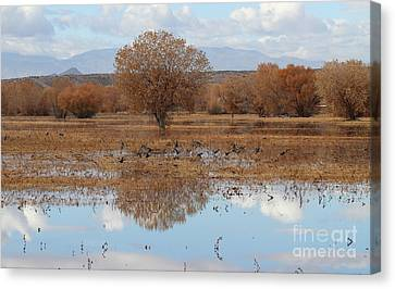 Canvas Print featuring the photograph Bird Heaven by Ruth Jolly