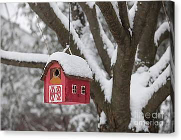 Bird House On Tree In Winter Canvas Print by Elena Elisseeva