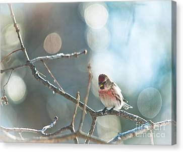 Bird In Bokeh Canvas Print by Cheryl Baxter