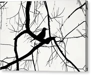 Bird In Silhouette Canvas Print by Jessie Gould