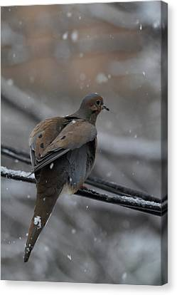 Bird In Snow - Animal - 01133 Canvas Print