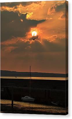Bird In The Sun Canvas Print by Tony Reddington