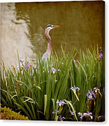 Bird In The Water Canvas Print by Milena Ilieva