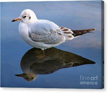 Canvas Print featuring the photograph Bird Reflections by John Swartz