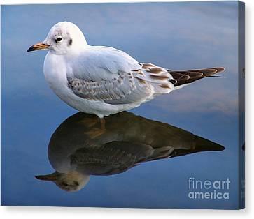 Bird Reflections Canvas Print by John Swartz