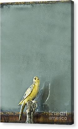 Bird Canvas Print by Margie Hurwich