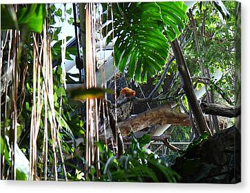 Bird - National Aquarium In Baltimore Md - 12121 Canvas Print by DC Photographer