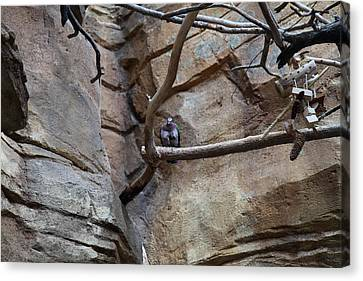 Bird - National Aquarium In Baltimore Md - 121214 Canvas Print by DC Photographer