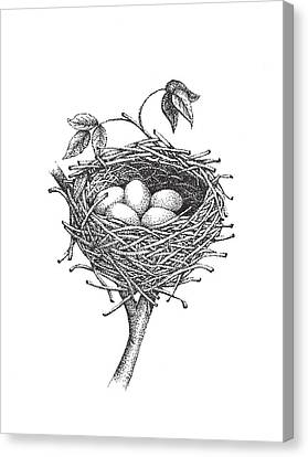 Bird Nest Canvas Print by Christy Beckwith