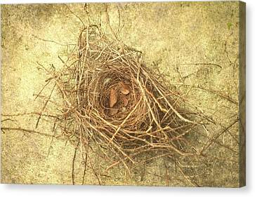 Bird Nest II Canvas Print by Suzanne Powers