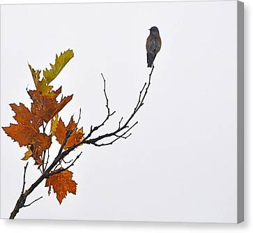 Canvas Print featuring the photograph Bird Of Autumn by AJ  Schibig
