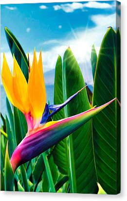 Bird Of Paradise 5 Canvas Print by Dawn Eshelman