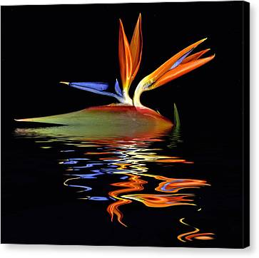 Bird Of Paradise Flood Canvas Print