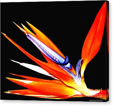 Canvas Print featuring the photograph Bird Of Paradise Flower With Oil Painting Effect by Rose Santuci-Sofranko