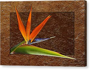 Bird Of Paradise Gold Leaf Canvas Print by Phyllis Denton