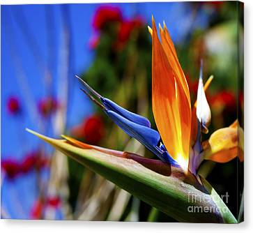Canvas Print featuring the photograph Bird Of Paradise Open For All To See by Jerry Cowart