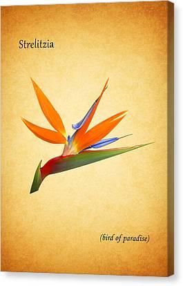 Bird Of Paradise Canvas Print by Mark Rogan