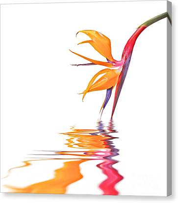 Bird Of Paradise Reflections Canvas Print