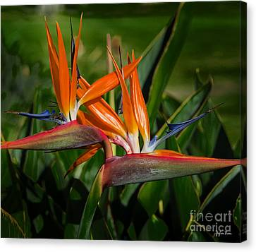 Bird Of Paradise Canvas Print by Yefim Bam