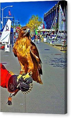 Bird Of Prey At Boat Show 2013 Canvas Print by Joseph Coulombe
