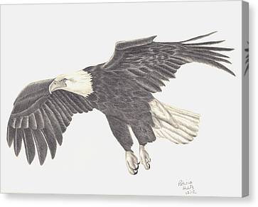 Canvas Print featuring the drawing Bird Of Prey by Patricia Hiltz