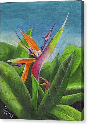Canvas Print featuring the painting Hawaiian Bird Of Paradise by Thomas J Herring