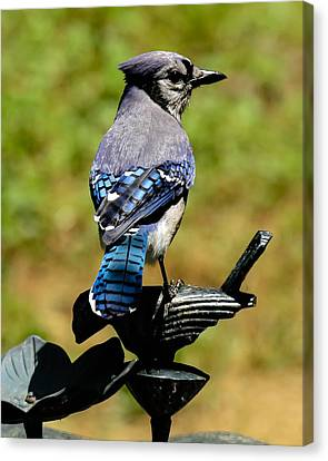 Bird On A Bird Canvas Print by Robert L Jackson