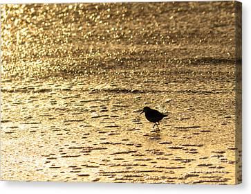 Bird On A Golden Shore Canvas Print by Paul Topp
