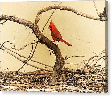 Canvas Print featuring the photograph Bird On A Vine by Jayne Wilson