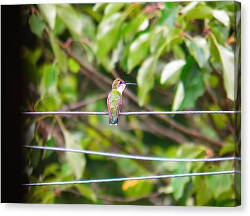 Canvas Print featuring the photograph Bird On A Wire by Nick Kirby
