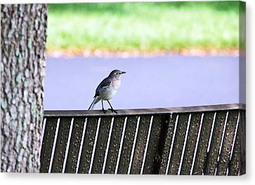 Bird On Bench Canvas Print by Aimee L Maher Photography and Art Visit ALMGallerydotcom