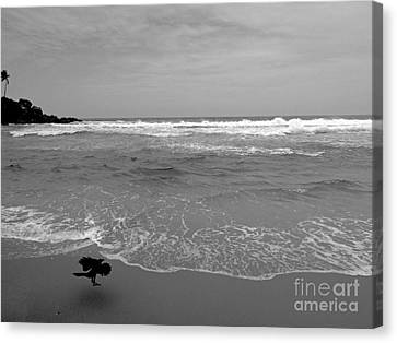 Bird On Kovalam Beach Canvas Print