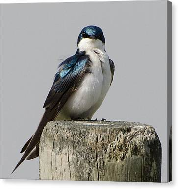 Brian Rock Canvas Print - Bird On Post by Brian Rock