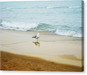 Bird On The Beach Canvas Print by Milena Ilieva