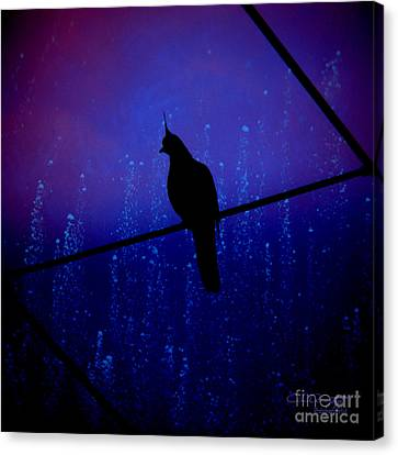 Bird On The Wire ... Canvas Print by Chris Armytage