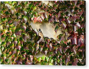 Snack Canvas Print - Bird On Wall Of Leafs by Tommytechno Sweden