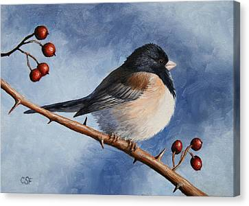 Bird Painting - Dark-eyed Junco Canvas Print by Crista Forest