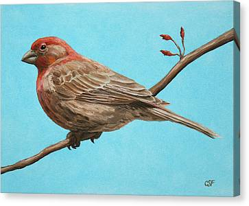 Bird Painting - House Finch Canvas Print