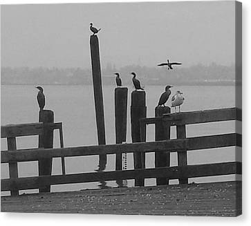 Bird Party In Black And White Canvas Print