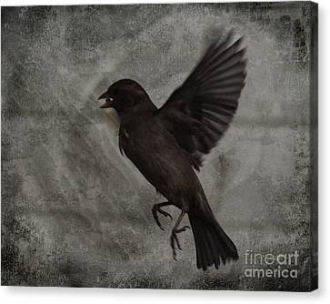 Bird Seed Canvas Print by Jim Wright