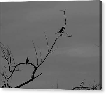 Bird Silhouette Black And White Canvas Print by Cathy Lindsey