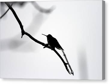 Bird Silhouette  Canvas Print