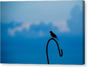 Canvas Print featuring the photograph Bird Silhouette  by Dee Dee  Whittle