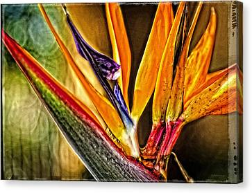 Bird Talk - Bird Of Paradise By Sharon Cummings Canvas Print by Sharon Cummings