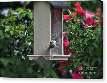 Canvas Print featuring the photograph Bird Time To Fly by Thomas Woolworth