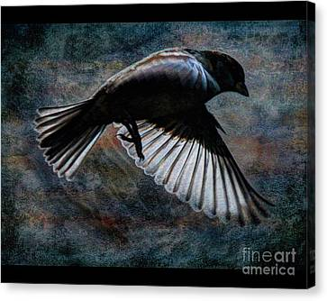 Bird7 Canvas Print by Jim Wright