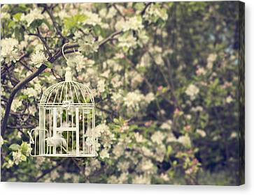 Birdcage In Blossom Canvas Print by Amanda Elwell