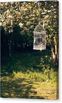 Birdcage In The Orchard Canvas Print by Amanda Elwell