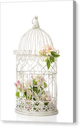 Birdcage Of Spring Blossom Canvas Print by Amanda Elwell